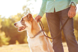 Customer Spotlight: 5 Tools Making Life Easier for Pet Care Business Owners