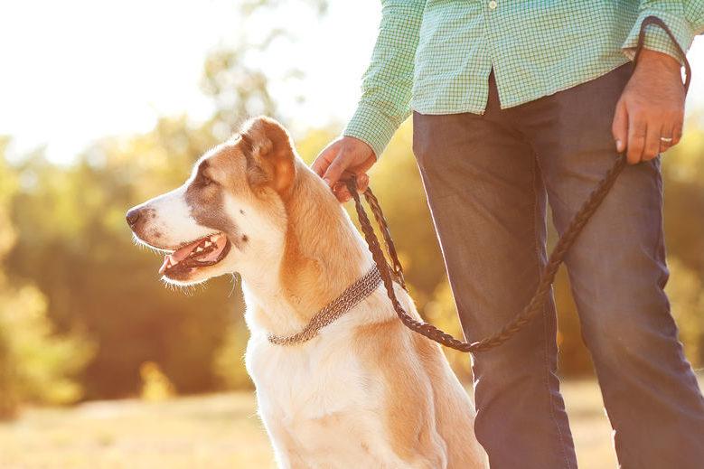 Dog walking Hireology